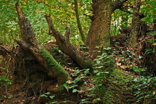 Tree, Tree Stump, Nature, Forest, Wood, Log, Broken