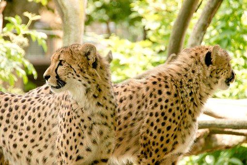 Africa, Kenya, Safari, Nature, Vacations, National Park