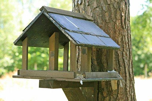 Abode, Apartment, Birch, Bird, Birdbox, Birdhouse