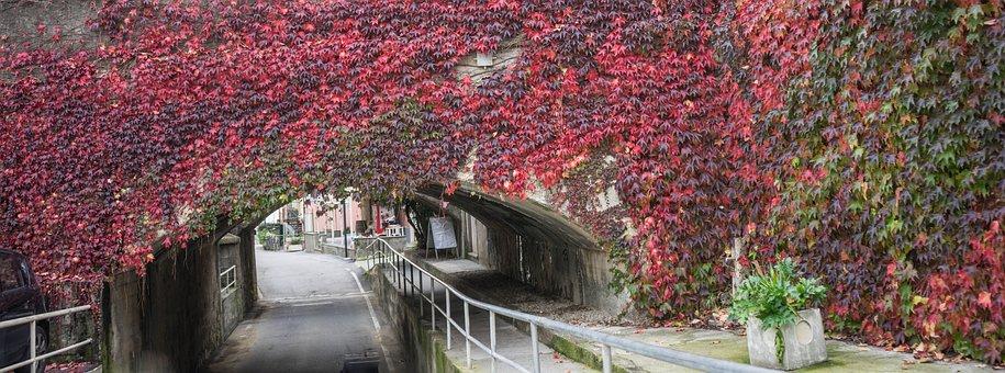 Bridge, Flowers, Underpass, Vines, Plants, Arch, Bend