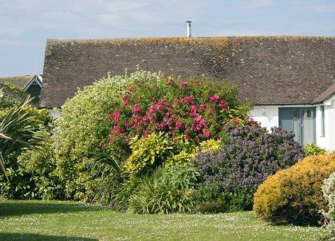 Garden, Green, Grass, Bush, Shrubs, Plants, Flowers