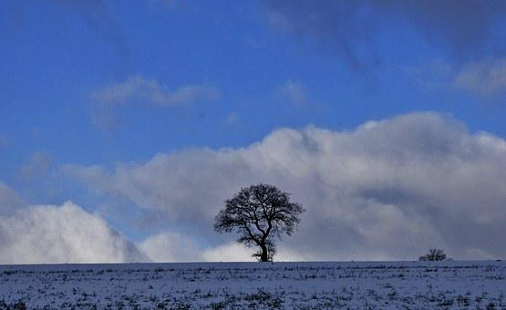 Tree, Nature, Winter, Landscape, Silhouette, Clouds