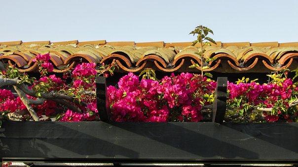 Cyprus, Ayia Napa, Kermia Beach, Roof, Bungalow