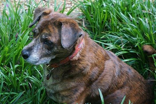 Dog, Ginger, Animals, Plants, Garden, Relaxing