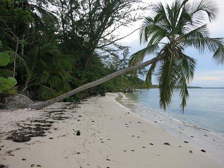 Beach, Leaning Palm, Caribbean, Dominican Republic, Sea