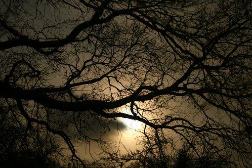 Darkness, Evening, Dark, Gloomy, Tree, Night, Sunset