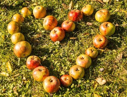 Heart, Apple, Rush, Fruit, Love, Eat, Food, Apple Heart