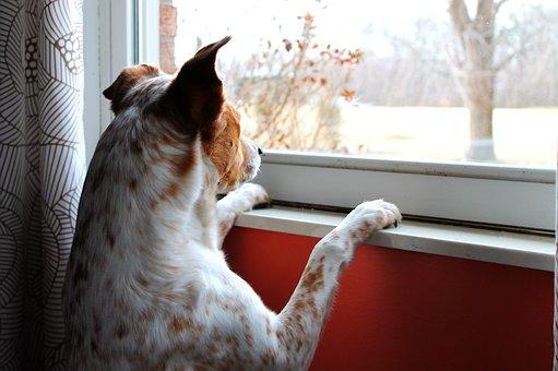 Dog, Intent, Watching, Intense, Waiting, Look