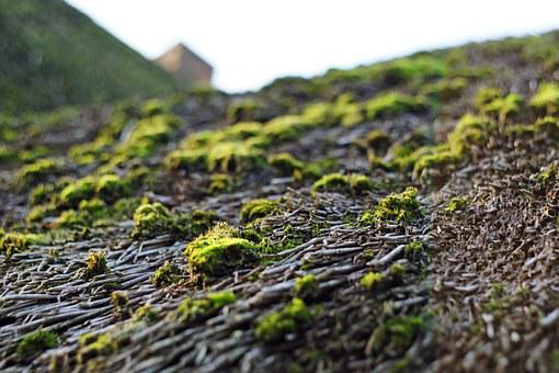 Thatched Roof, Ahrenshoop, Darß, Thatched Roofs, Moss