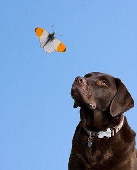 Dog, Butterfly, Blue Sky, Sky, Animal, Nature