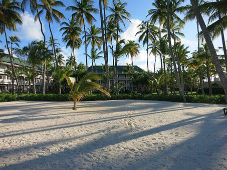 Beach, Palm Trees, Caribbean, Dominican Republic