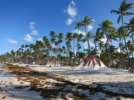 Beach, Palm Trees, Caribbean, Dominican Republic, Sea