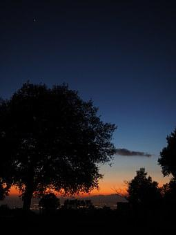 Tree, Sunset, At Night, Peaceful, Dark, Palma