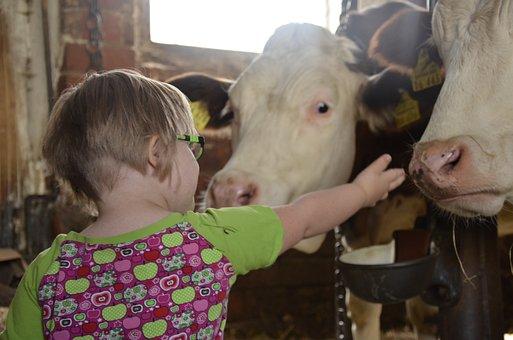 Child, Farm, Children, Play, Cow, Agriculture, Boy