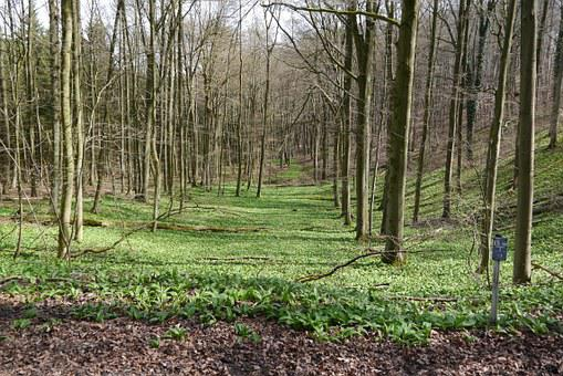 Forest, Nature, Premiumweg, Landscape, Hiking