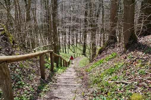 Reichenbach, Stairs, Increased, Nature, Forest, Trail