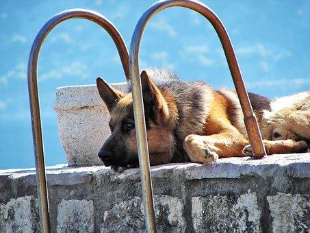 German Shepherd, Dog, Pet, Sad, Guardian, Resting
