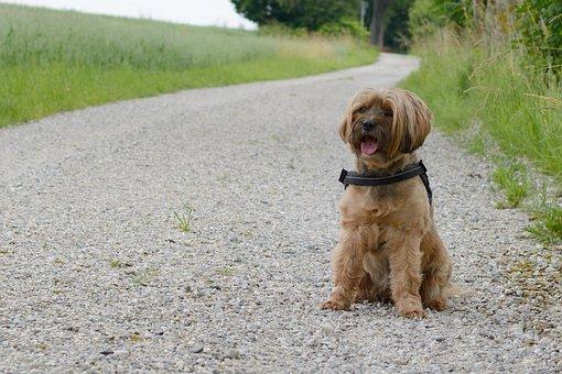 Dog, Sitting, Seat, Road, Away, Wait, Pet, Attention