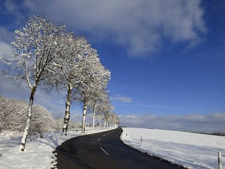 Trees, Snow Landscape, Freezing, Blue Sky, Snow