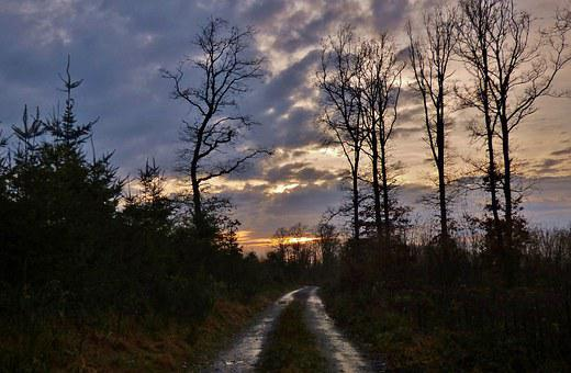 Forest Path, Nature, Trees, Sunset, December