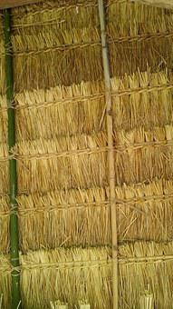 Thatch, Roof, Laos, Thatched, Village, Travel, Nature