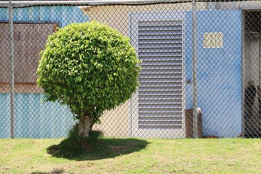 Tree, Garden, Bungalow, Prune, Globular