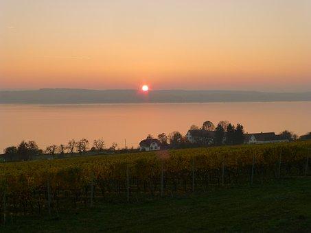 Birnau, Afterglow, Sunset, Lake Constance, Vines