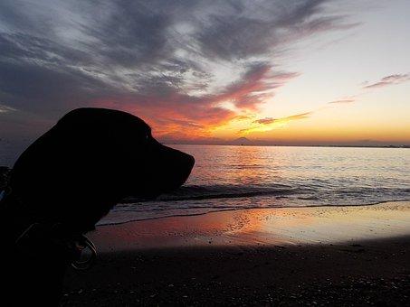 Dog, Labrador Retriever, Sunset, Sea, Wave, At Dusk
