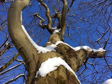 Tree, Aesthetic, Winter, Branch, Log, Crown
