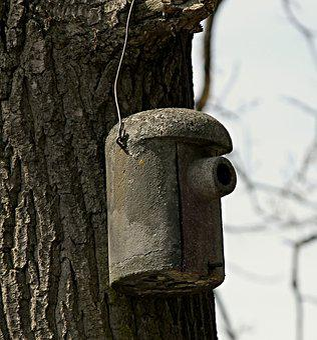 Nesting Box, Aviary, Nesting Place, Garden, Tree
