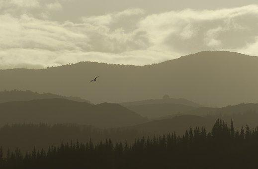 Layers, Mountain, Bird, Flying, Telephoto, Golden Hour