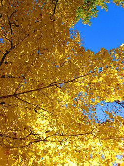 The Crown Of The Tree, Blue Sky, Autumn, Autumn Colors