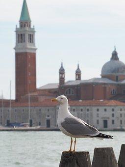 Venice, Seagull, Church, Bird, Italy, Building