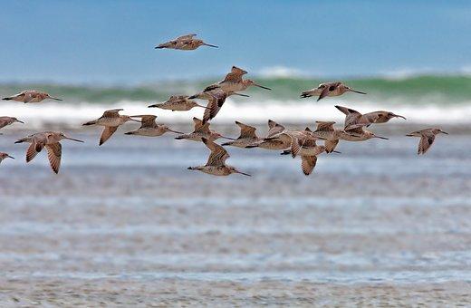 Bird, The Kind, Flight, Coast, Pass, Wave