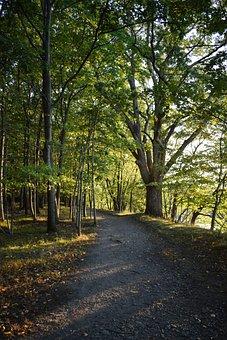 Hiking, Woods, Trees, Hike, Adventure, Nature, Outdoors