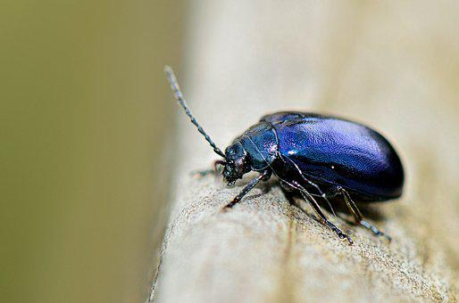 Nature, Insect, Forest, Garden, Bichito, Animals, Macro