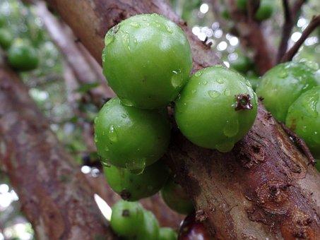 Nature, Brazilian, Fruit