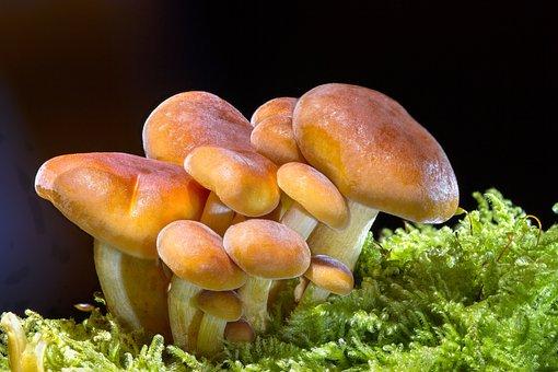 Mushroom, Wood Fungus, Sponge, Mini Mushroom