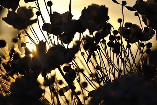 Sun, Flower, Blossom, Bloom, Nature, Yellow, Sunflower