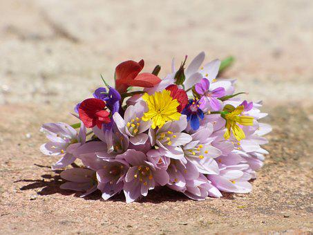Flowers, Wild Flowers, Corsage, Still Life, Beauty