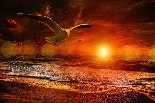 Beach, Gull, Bird, Flying, Sea, Coast, Clouds, Orange