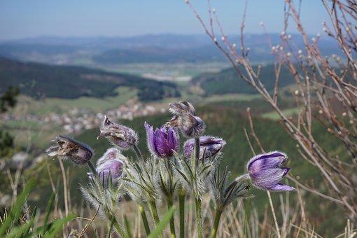 Flowers, Purple, Bloom, Nature, Suľov