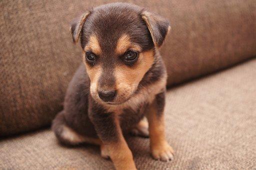 Dog, Brown, Puppy, Animal, Man's Best Friend, View