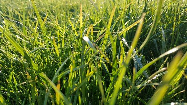 Grass, Green, Nature, Meadow, Summer, Park, Garcia