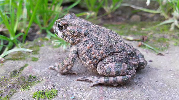 Frog, Toad, Nature, Summer, Green Grass