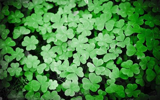 Clovers, Green, Plant, Patrick, Holiday, Leaf, Ireland
