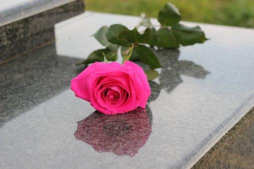 Pink Rose, Grey Marble, Gravestone, Grave, Symbol, Love