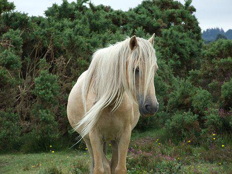 Mare, Horse, New Forest Pony, Green News, Green New