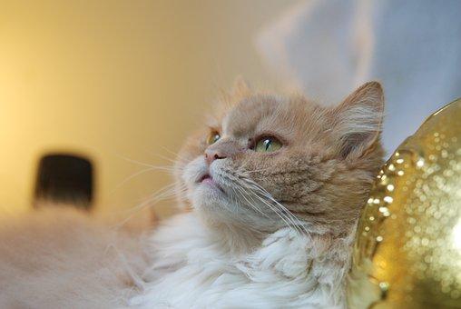 Cat, Pet, Gel Reviews, Cat Mia, Lateral Face