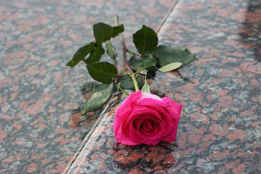 Pink Rose, Red Marble, Gravestone, Grave, Symbol, Love
